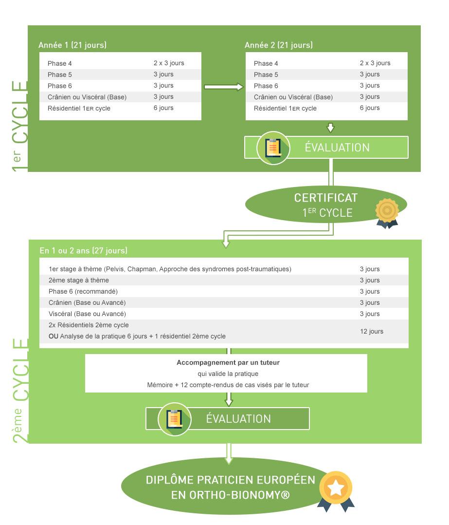 Schéma du cursus de formation pour devenir praticien en ortho-bionomy